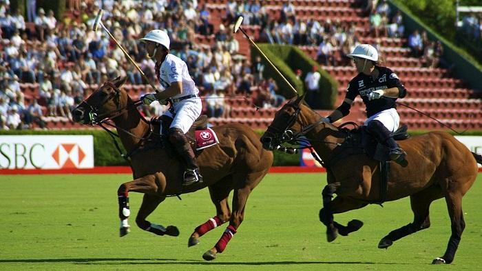 Áo thun Polo là gì và lịch sử tên gọi Polo từ đâu